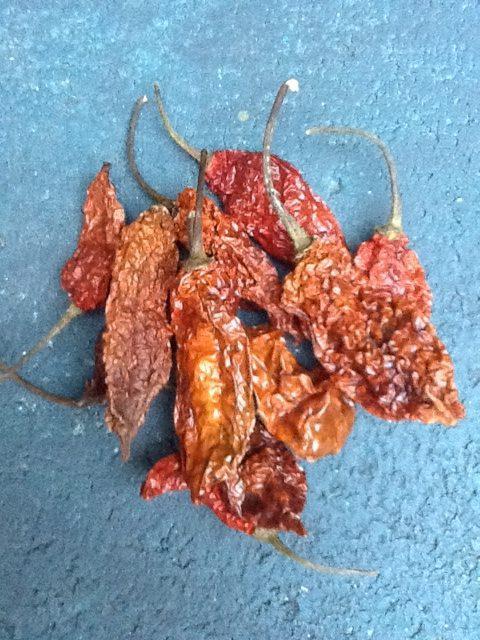 Ghost Pepper – Bhut Jolokia (10 pods)