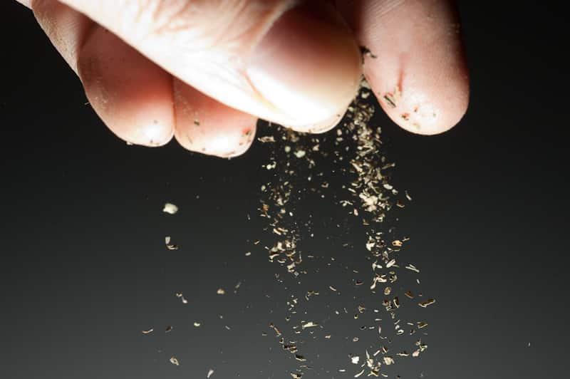 Who Dat Salt Blend